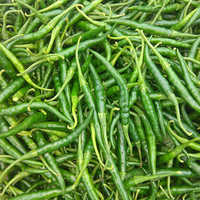 Fresh Preserved Green Chilli