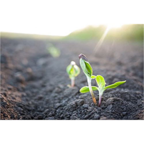 Bio Plant Growth Stimulator