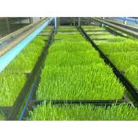 Hydroponic Fodder Seeds