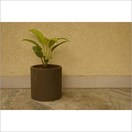 Concrete Designer Planters