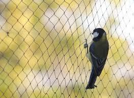 Netting Bird