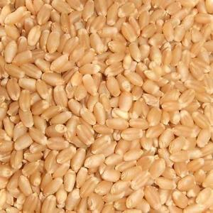 Raw Wheat
