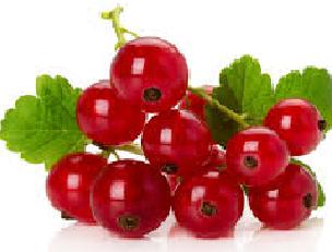 RED CURRENT FRUIT  FLAVOR