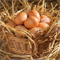 Fresh Poultry Eggs