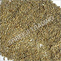 Green Millet (Cattle feeds)