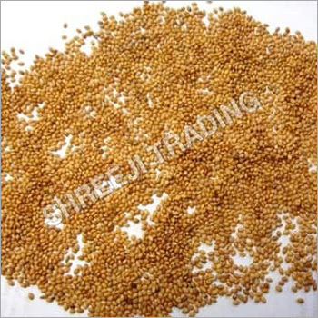 Yellow Foxtail Millet Seed Regular