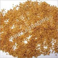 Pearl Millet Seed