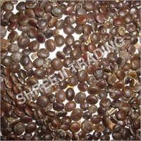 Acacia Nilotica Seeds
