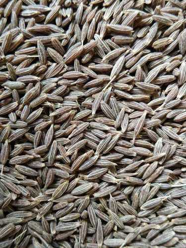 Cumin Seeds- Bold Quality