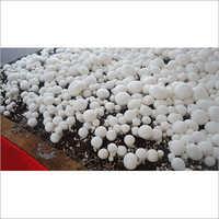 Mushroom Chamber