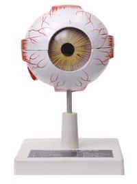 Human Eye Model (Seven Parts)