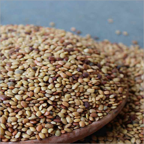 Gram Seed