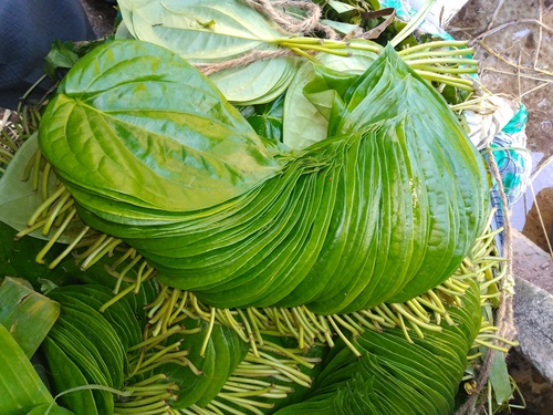 Kali Bangla Betel Leaves