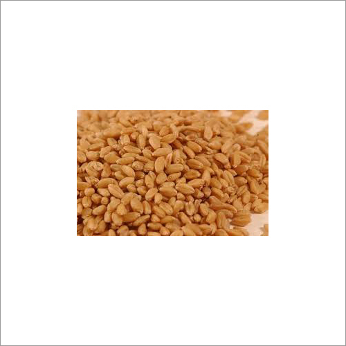 Sharbati Wheat Grain