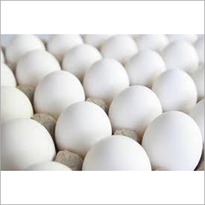 White Poultry Egg
