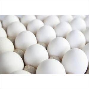 White Poultry Egg