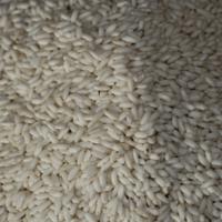 Vietnamese Glutinous Rice