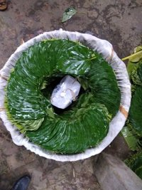 Khar Betel Leaves