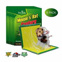 Rat Glue pad