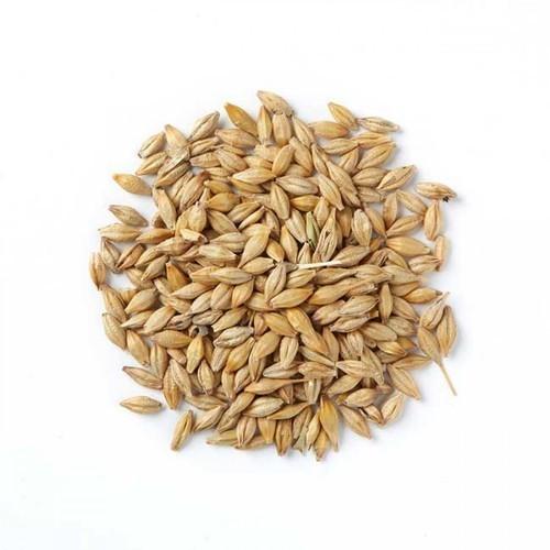 Barley (jou)
