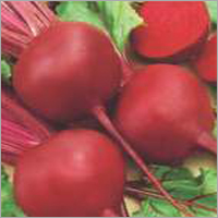 Beet Root - Rubi Queen (Imported)