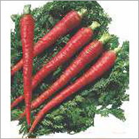 Op Carrot- Desi Red