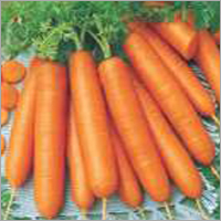 Op Carrot- Early Nates