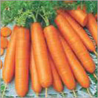 Carrot Early Nates