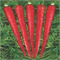 Op Carrot Red Core (Imported)