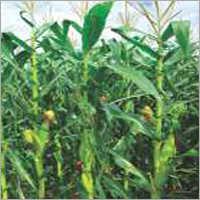 Field Crops