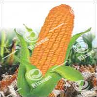 Maize Hybrid RS-114