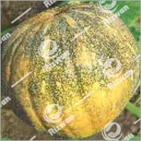 Pumpkin Desi Round