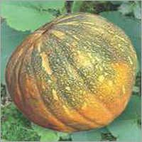 Pumpkin F1 RSS-1050