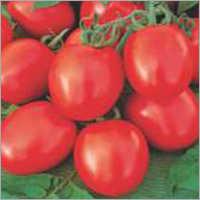 Tomato F1 Alam