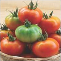 Tomato F1 Annapurna Plus