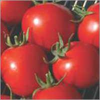 Tomato F1 Dona-55