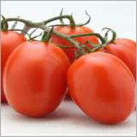 Tomato F1 Winner