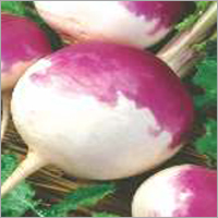 Tumip Purple Top (Imp