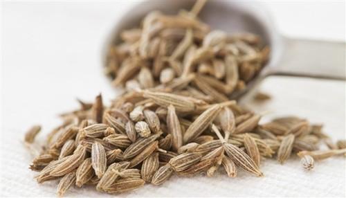 Singapore Quality 99 % Cumin Seeds
