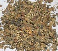 Dried Makoy (Solanum Nigrum)