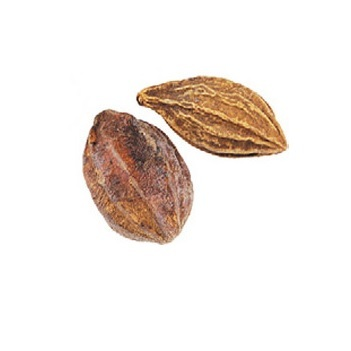 Wild Dried Myrobalan