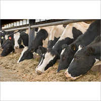 Animal Cattle Feed Supplements