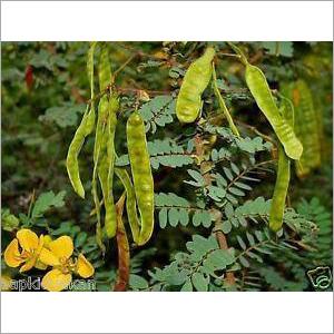 Seena Leaf