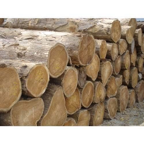Mp Teak Wood