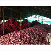 Fresh Red Organic Onion