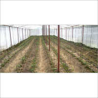 Poly Greenhouses