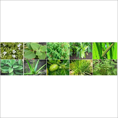 Horticultural Seeds Nursery