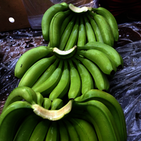 G9 Quality Cavendish Banana