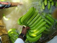 Indian Best Every Cavendish Banana