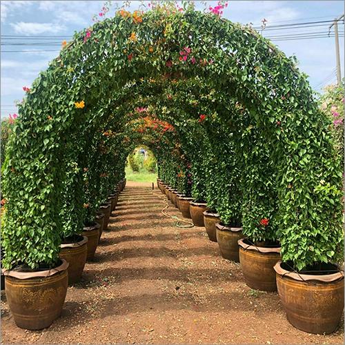 Gardenning Plant